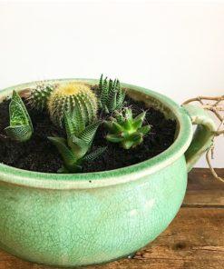 buy succulents garden online gifts