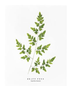 grape fern print