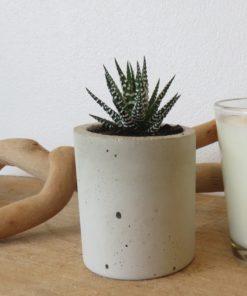 mini succulent gifts online