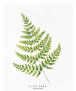 pine fern print